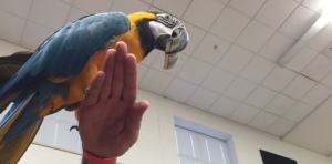 Mr. Money Monster holding a Macaw with cash at a Mini Monster school assembly