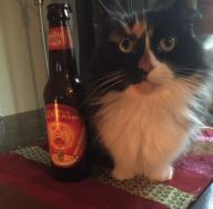 cats and beer 3
