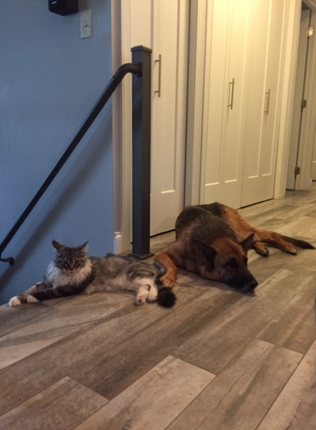 pup-and-cat